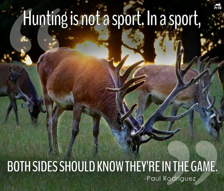hunting is not a sport animals have rights too Hunting for sport is a very controversial topic and this debate discusses this issue   9 rights: do animals have no rights protecting them from hunting  hunting  not a sport animals don't know they're in the game paul.