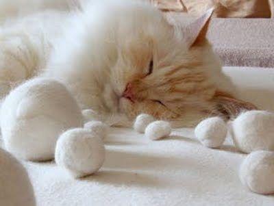 Trucos para eliminar los pelos de gato en casa