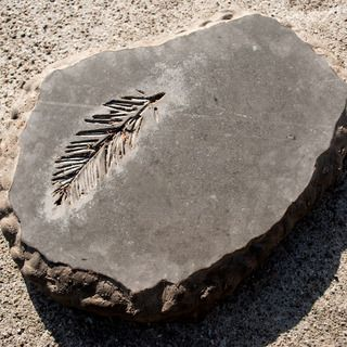 DIY CONCRETE:: Stepping Stone Fossil