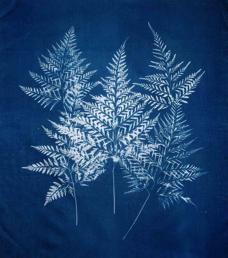 cyanotype fabric | five ferns cyanotype on fabric 16 x 20