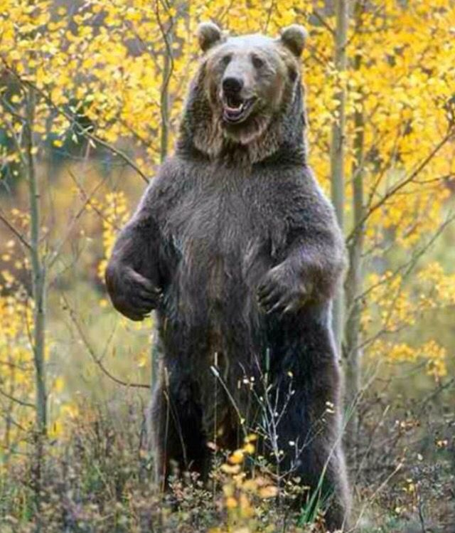 Do bears sit to shit in the woods ? NO = they STAND to shit, they don't sit !! As can't STAND it when there mates see them attempt to wipe there bum on tree bark after a crap !! No soft toilet tissue for them !!! Bet they wish the Andrex puppy lived in their forest BUTT like Freddy Krugger = wiping your bum with dagger paws is 'problematic' when wiping !! Ouch = better stick to tree bark then Mr Bear ‼️