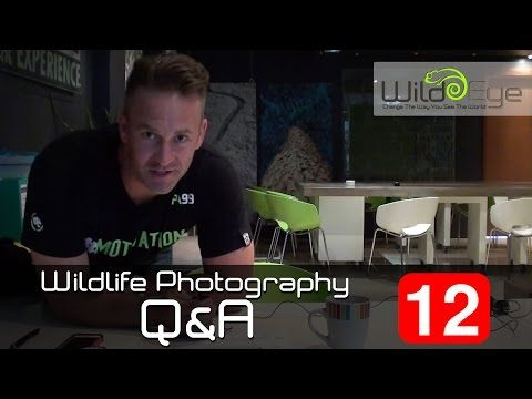 Wildlife Photography Q&A: Episode 12