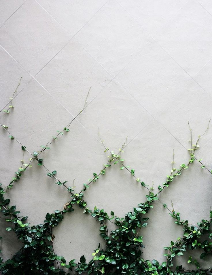 Love this trellised creeper
