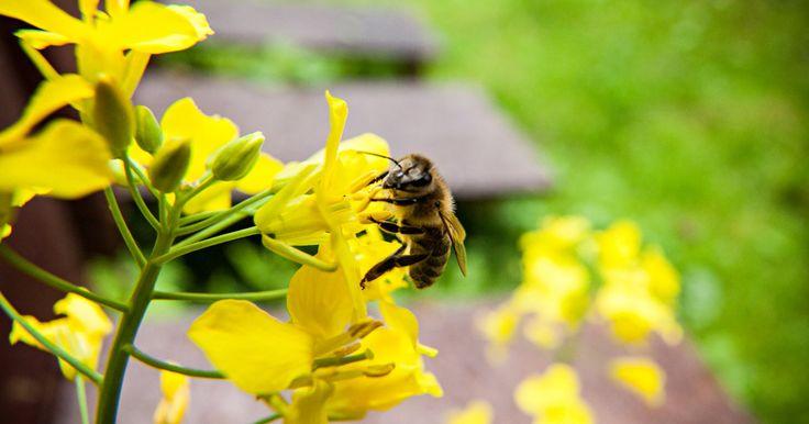 Las abejas tienen un papel esencial en los ecosistemas. Un tercio de los alimentos que consumimos y cerca del 90% de las plantas silvestres dependen de la polinización. Firma para protegerlas.