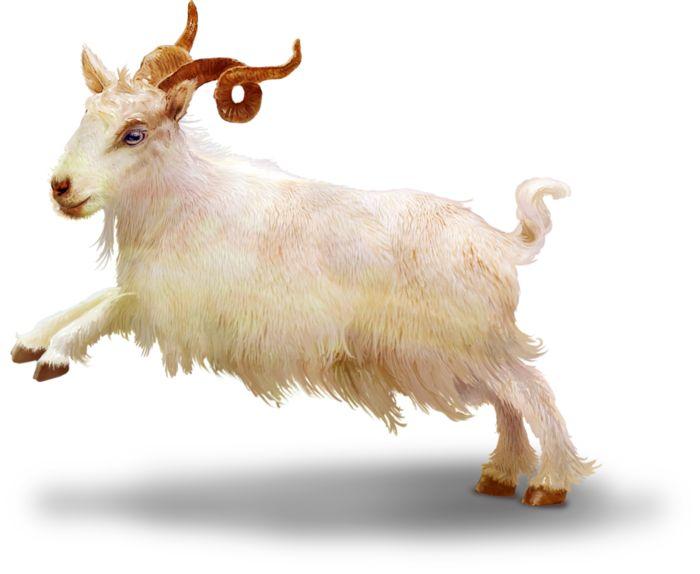 TurningLeafApothecary_LorieD_c_Sir_Gilbert_Goat1bb (700x574, 311Kb)