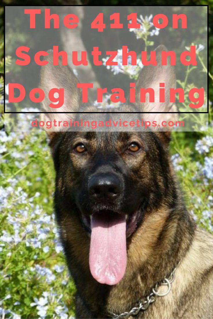 Dog Training Dublin Ohio