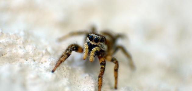 تفسير حلم العنكبوت للعزباء والمتزوجة والحامل Spider Animals Insects
