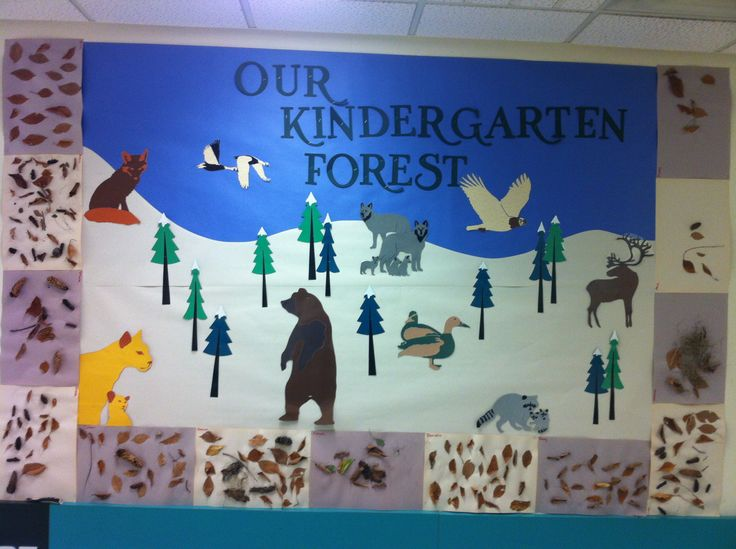 Science Forest Kindergarten Bulletin Board: Different animals from the Boreal Forest.