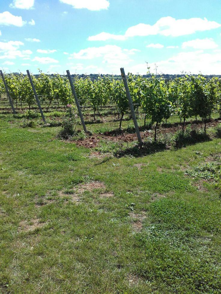 Hattingley Vineyard Hampshire - beautiful sparkling wine.