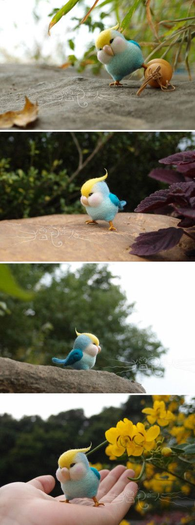 So chubby!!!! I love diss bird!!!❤️