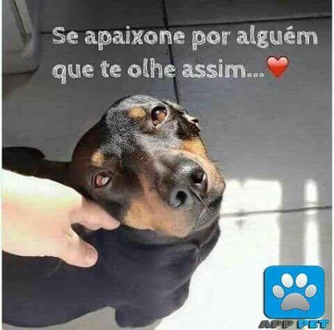 <3 <3 <3 #petmeupet #filhode4patas #cachorro #amorincondicional #maedepet