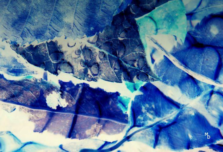 © Marie Deschene www.mariedeschene.com