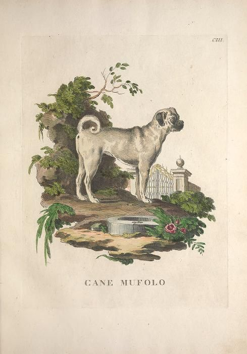 v. 3 - Descrizioni degli animali : - Biodiversity Heritage Library