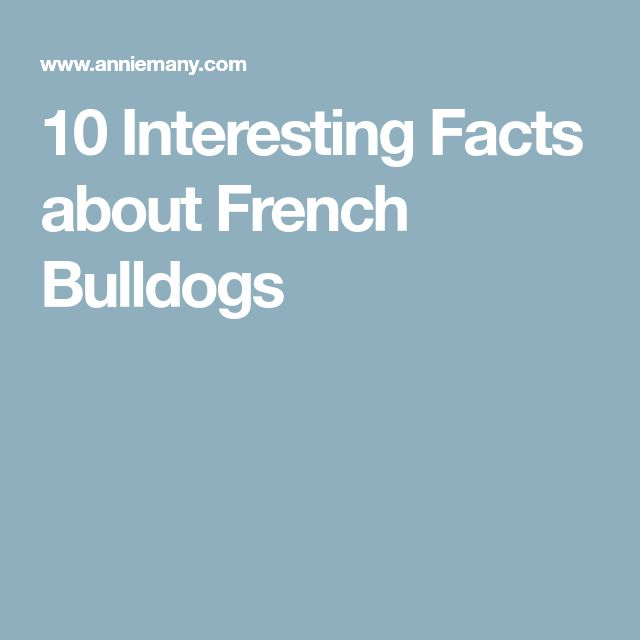 10 Interesting Facts about French Bulldogs