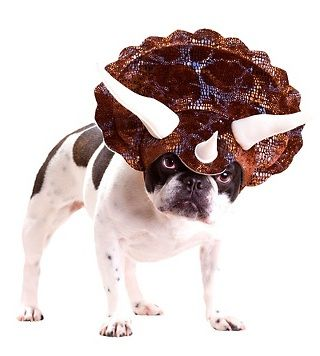 How about a herd of dinosaurs? Featured: Animal Planet Triceratops Dog Costume