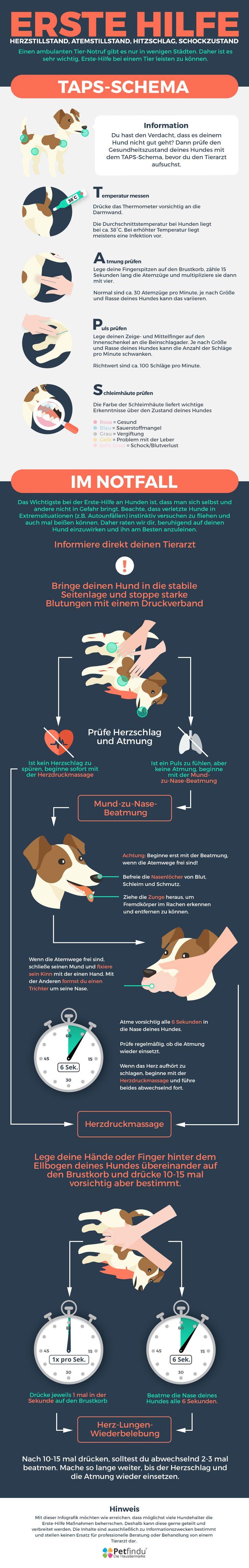Wie helfe ich meinem Hund im Notfall