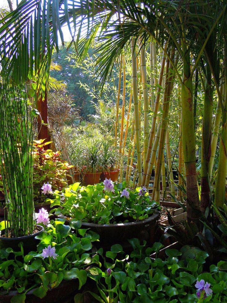M s de 25 bellas ideas sobre tipos de jardines en for Tipos de jardines pequenos