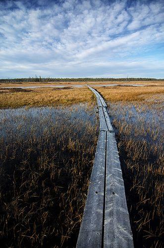 Petkula, Lapland, Finland - Walk   Flickr - Photo Sharing!