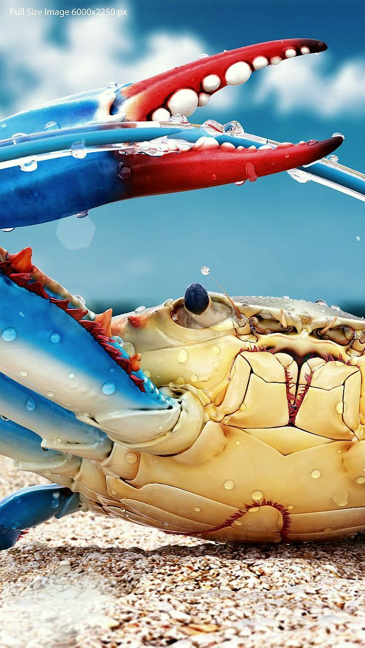 La razón de esto es que toda creación de Dios es excelente. (1 Timoteo 4:4) (Blue Crab) SB