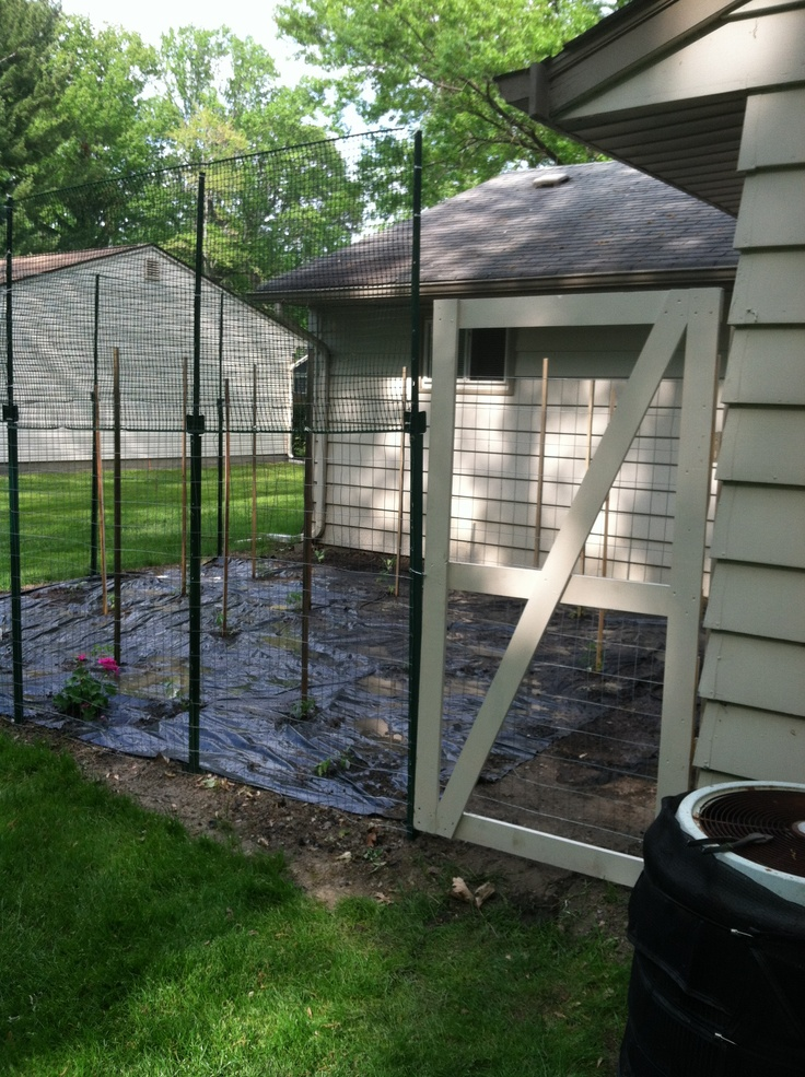 deer proof garden fence my husband built to keep them out - Deer Proof Vegetable Garden Ideas