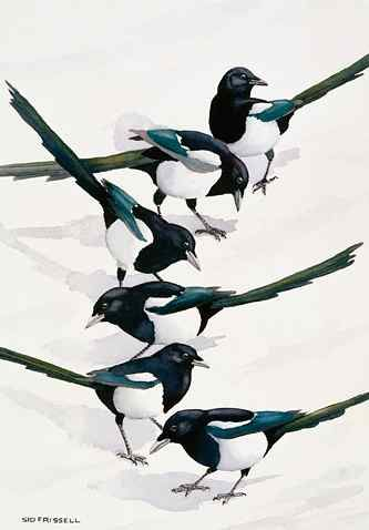 Sid Frissell (Emigrant, Montana), Magpie Patterns, 2005)