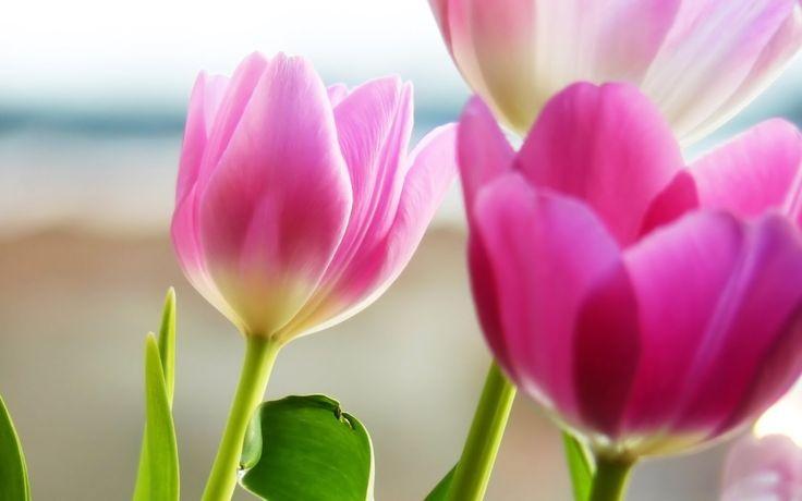 Meditace pro odpuštění sobě samým od Doreen Virtue