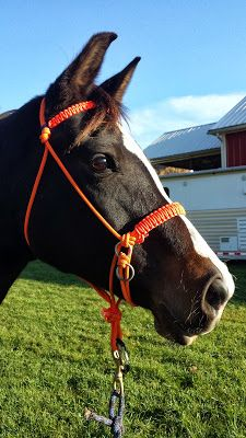 In Omnia Paratus: How To Tie Your Own Rope Halter