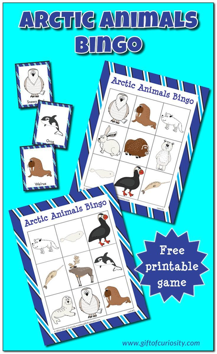 Free Arctic Animals Bingo printable game. What a great resource for helping preschoolers, kindergartners, and other young kids learn the names of common Arctic animals! || Gift of Curiosity
