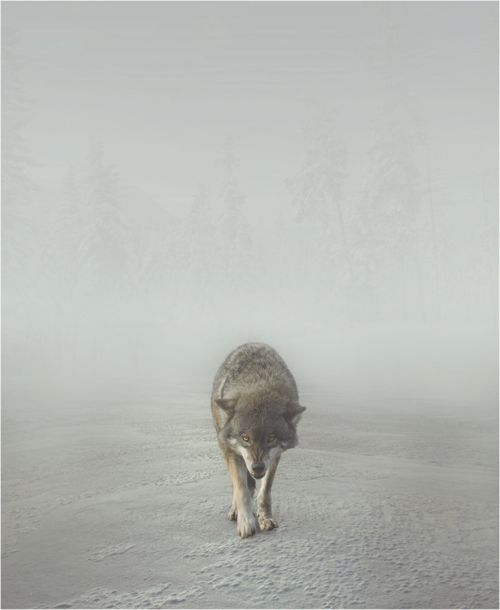 The Gifts Of Life (wolf)
