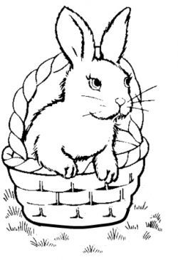 Luxury Rabbit Coloring Book 54 Bunny coloring pages