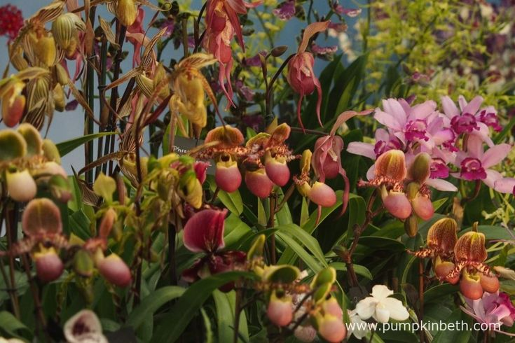 A closer look at Vacherot & Lecoufle's Gold Medal winning orchid exhibit, at The RHS Chelsea Flower Show 2016.