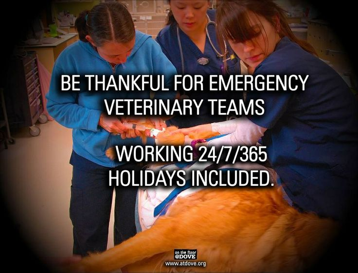 Thank you to all my emergency vet friends! Been there, done that, hard work!  But so worth it!