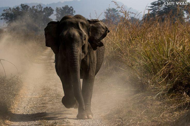 Elephant Charging !!  Dhikala Never disappoints!!! Action can happen any Time!!!  #elephant #charge #elephantcharge #dhikala #corbett #jimcorbet #wildlife #animal #wildlifeanimal #wildlifephotography #wildlifephotogrpher #big5 #portrait #elephantportrait