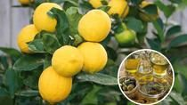 Small Group Hiking Tour to a Lemon Farm with Tastings, Sorrento, Hiking & Camping