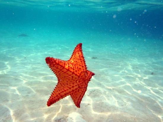 Starfish floating back to the bottom, ocean, water, blue, sun, summer feeling, seestern schwimmt im wasser, sommer spirit