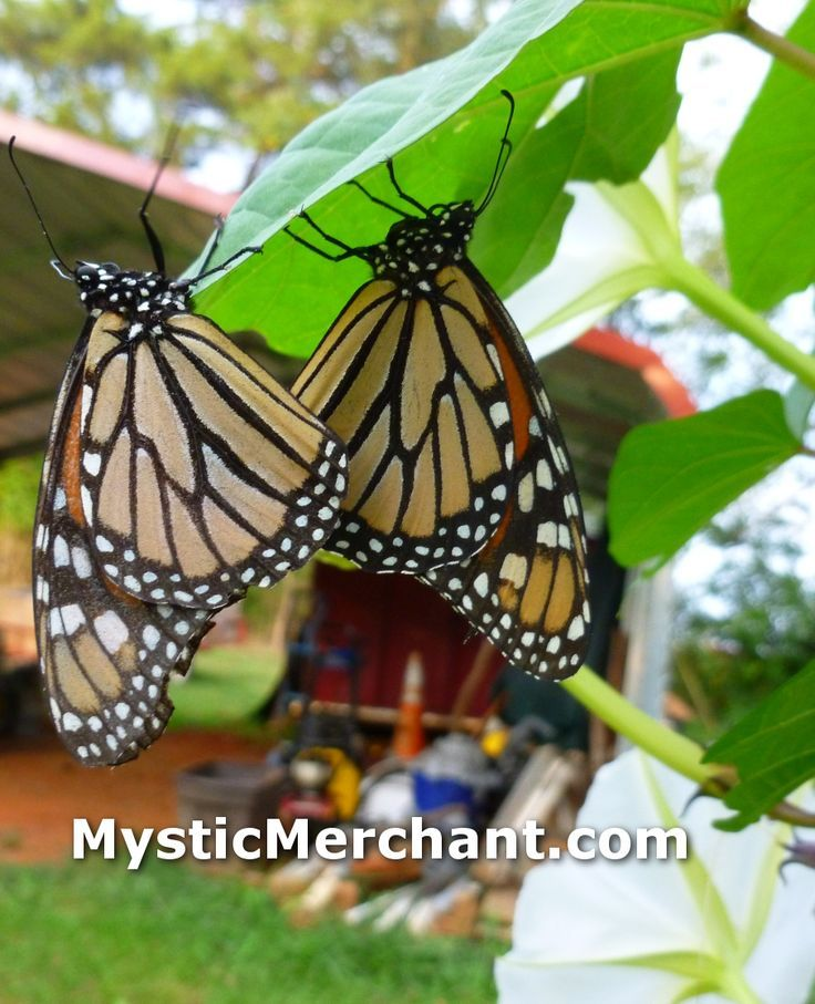 34 best My Farm Deep Chatham Gardens images on Pinterest | Deep ...