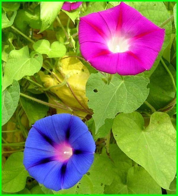 Nama Bunga Foto Foto Makna Dan Artinya Lengkap Kebun Bunga Bunga Menanam