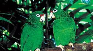 Couple of parrot.