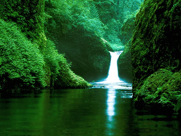 Not surprise here, being the largest tropical rain forest in the planet, the amazon rain forest covers a huge part of South America covering the Amazon Basin. Description from fyiindonesia.blogspot.com. I searched for this on bing.com/images