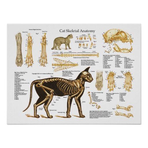 Poster esqueletal felino da anatomia do gato