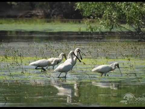 Danube Delta Europe's largest natural wetland - Romania (Delta Dunarii)