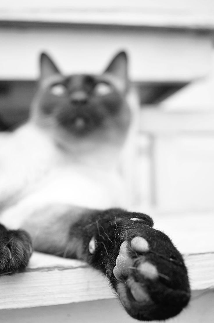 my cat foot