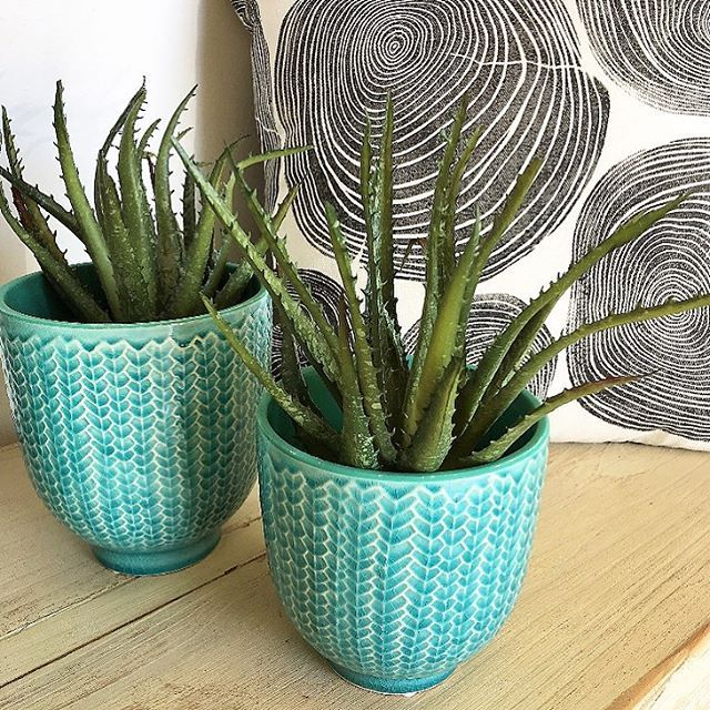 Faux aloes in store... yep not real at all... how good do they look??