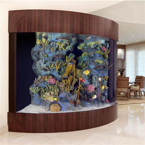 beautiful and unique Fish tank