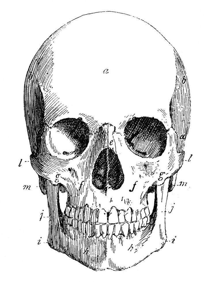 Skull Anatomy Coloring Pages | Anatómia