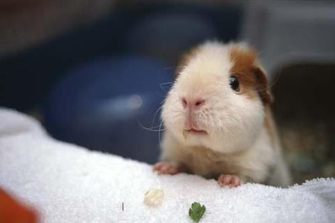 Baby piggie