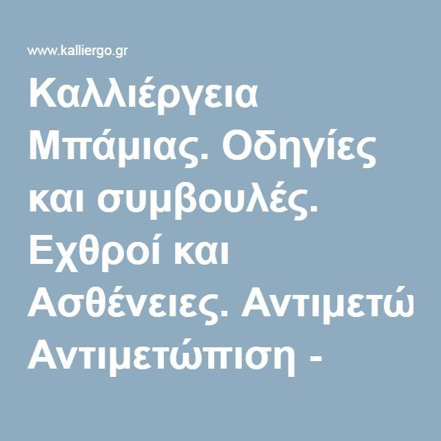 Καλλιέργεια Μπάμιας. Οδηγίες και συμβουλές. Εχθροί και Ασθένειες. Αντιμετώπιση - kalliergo.gr