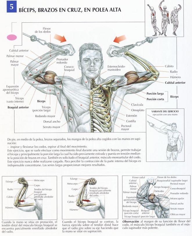 rutinas biceps triceps para volumen