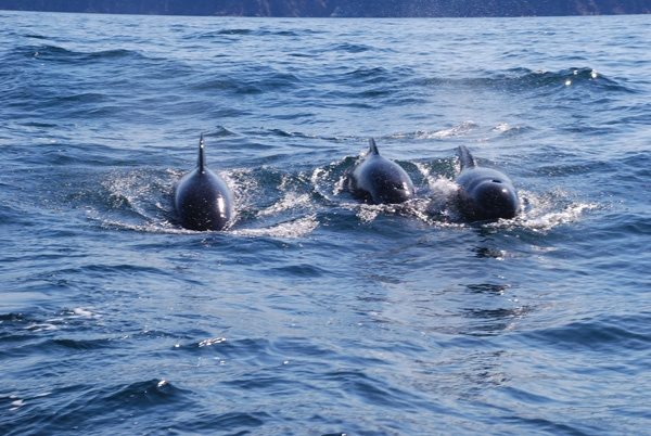 Whales in northern Cape Breton on a recent Chevrolet Malibu drive trip.  Epic!!