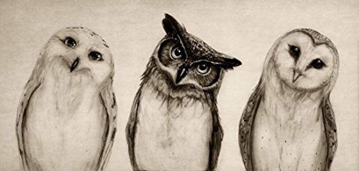 Shakaka The Owls 3 Leinwand Wandkunst für Zuhause Dekoration Leinwand drucken – 16 x 12
